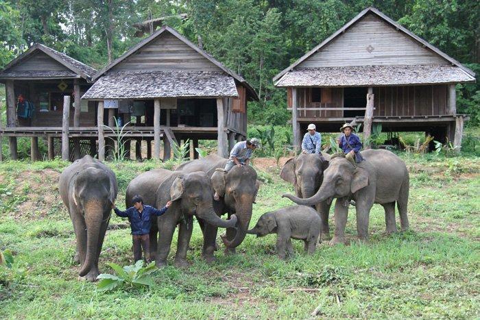 Mahout School, Laos