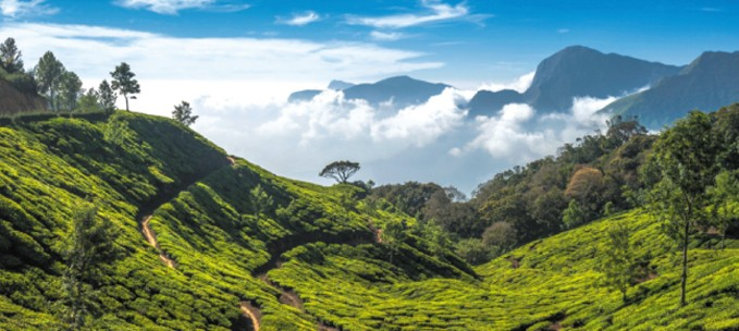 Discovering the Hills of Southwest India trip