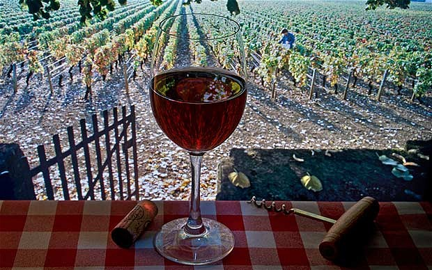 Rose Wine Tours In Provence